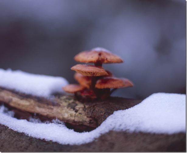 Siebenmühlental Pilz Kopie