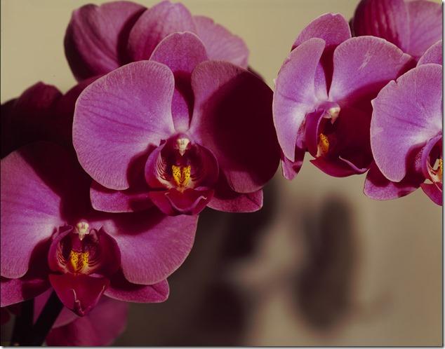 Orchidee 4800 klein