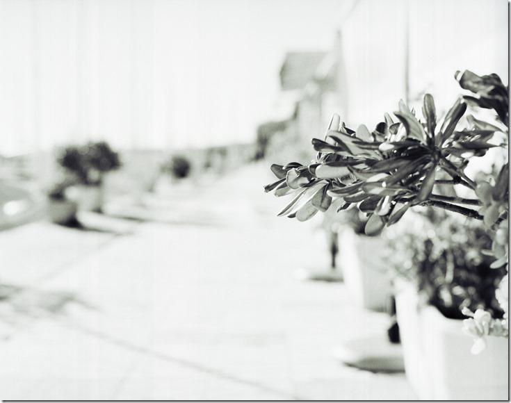 IR Blume in Straße BW 3200