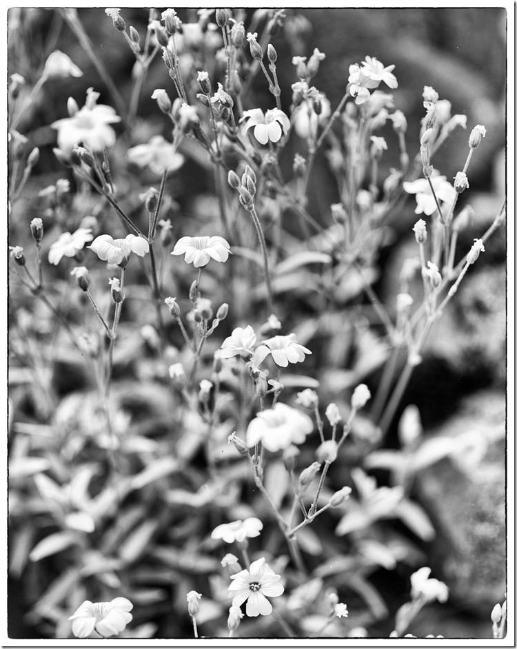 Flowers BW 2400 Efex