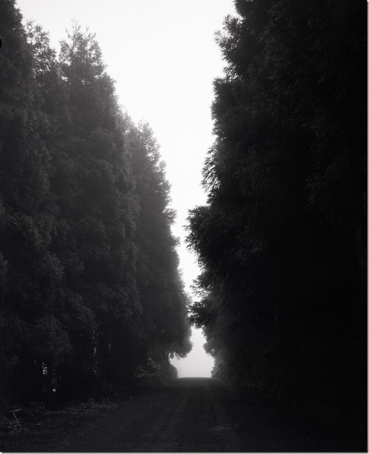 Faial Forest in Fog 2 BW 3200 (Andere)