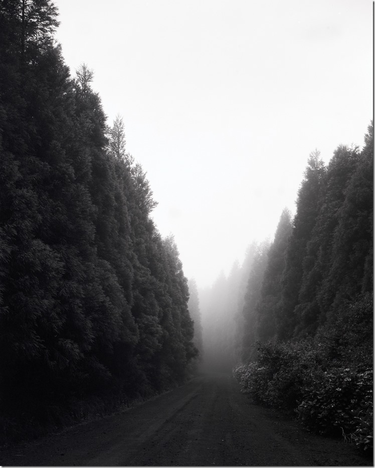 Faial Forest in Fog BW 3200 (Andere)