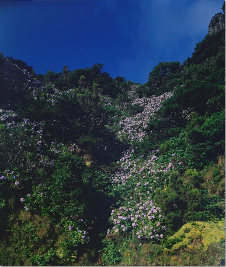 Hydrangea Mountains DIA 3200 (Andere)
