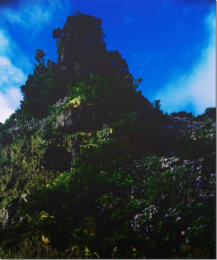 Hyrdrangea Mountain DIA 3200 (Andere)