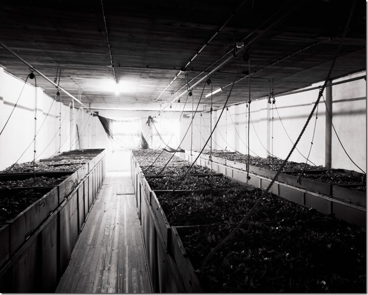 Inside Tea Factory BW 3200 (Andere)