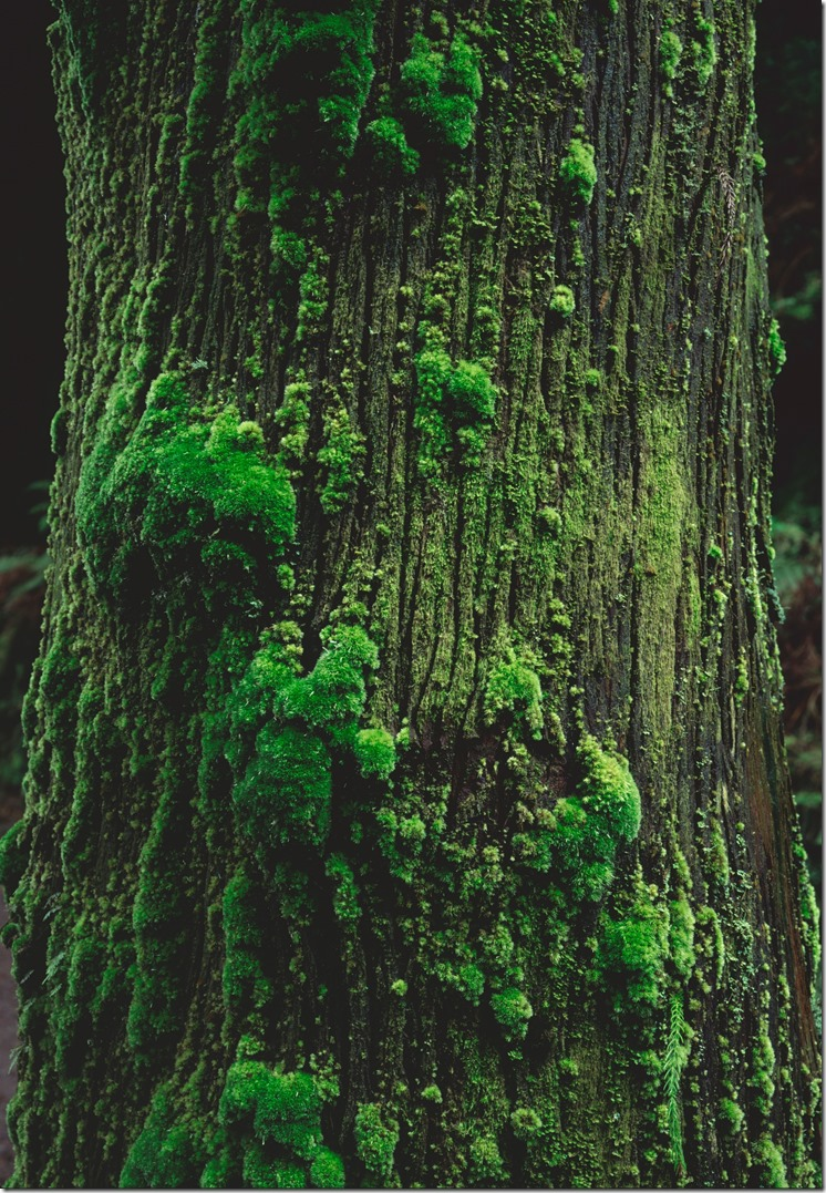 Tree base DIA 3200 (Andere)