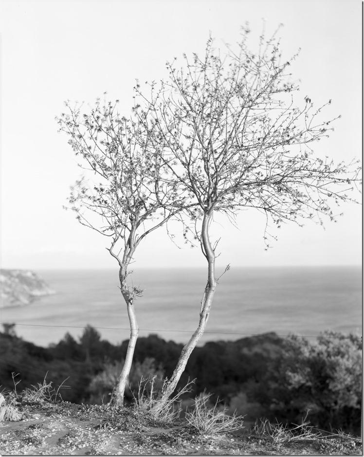 Baum Cadaques (4) (Andere)