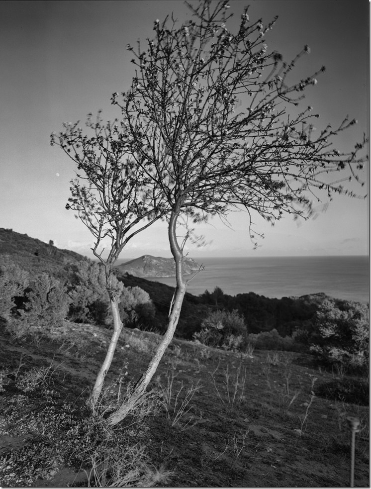 Baum Cadaques