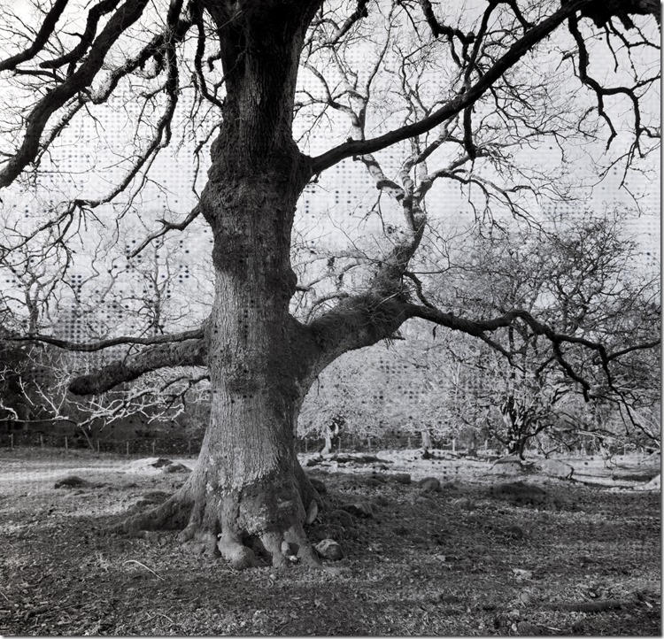 Lake District Oak 2 BW 2400 (Andere)