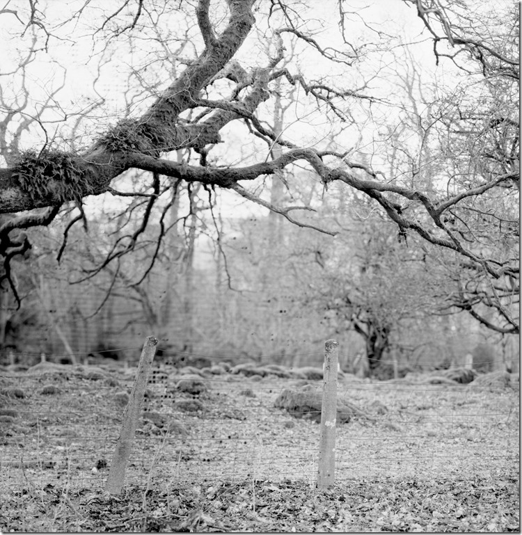 Lake District Oak BW 2400 (Andere)
