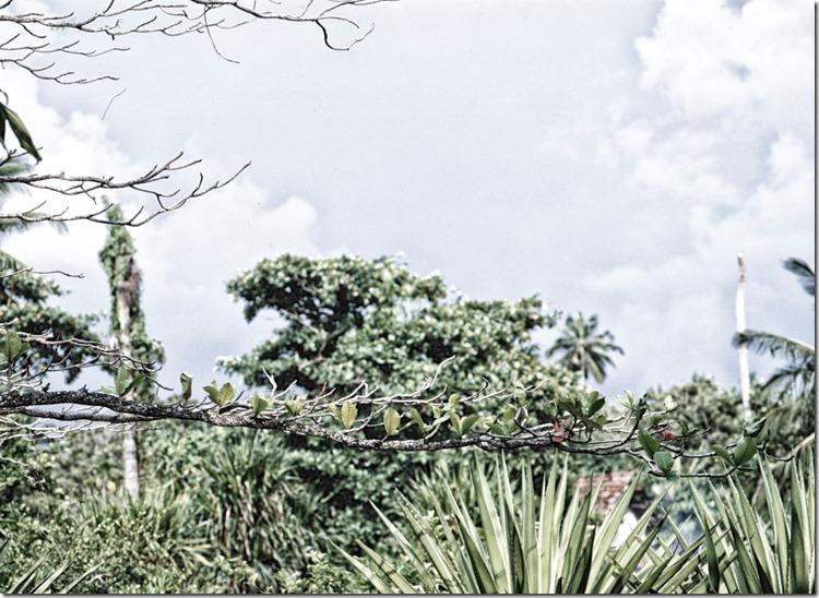 Lanka (70) (Andere)