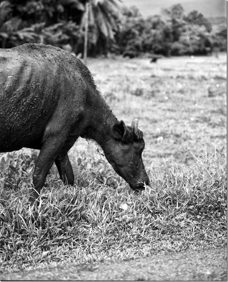 Lanka (94) (Andere)