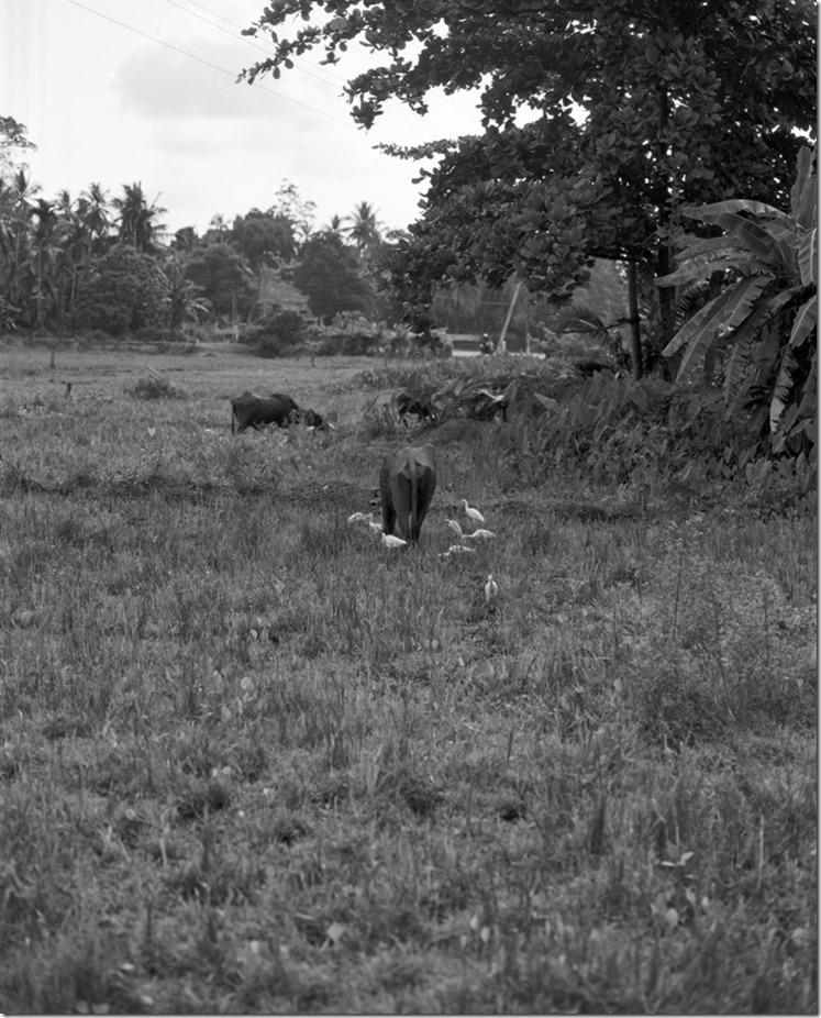 Lanka (95) (Andere)