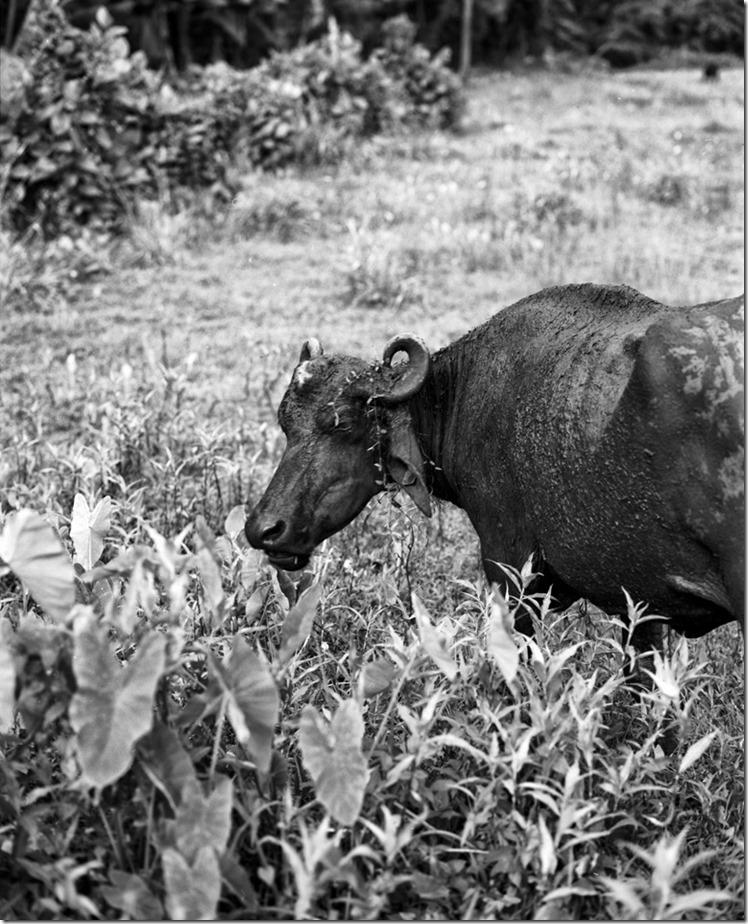 Lanka (96) (Andere)