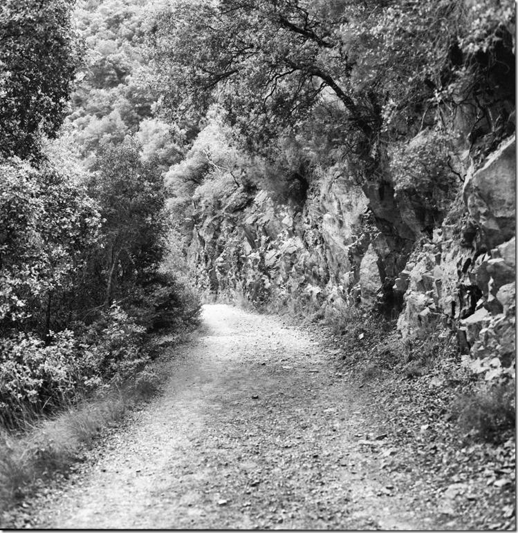 Sant Aniol Hike  (10)