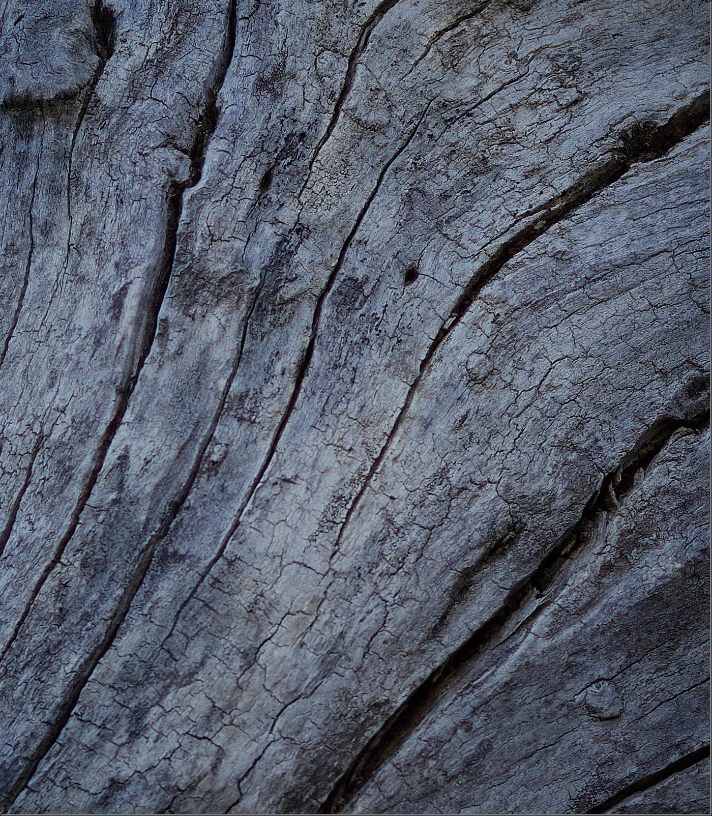 Gnarly Tree With Bark 1