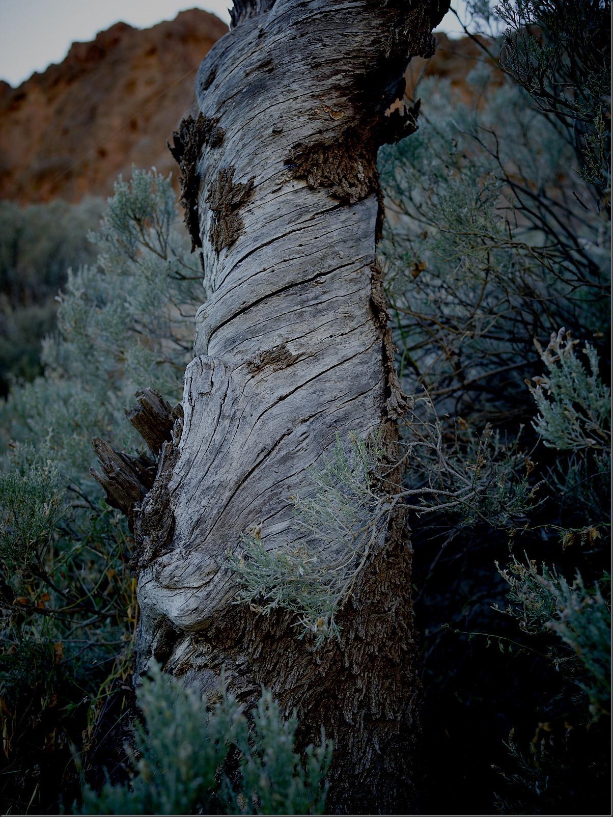Gnarly Tree With Bark